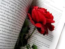 Feliz día del libro: Frases de libro